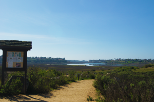 Upper Newport Bay Trail