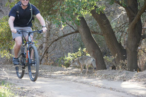 Slow down to avoid encountering/hitting wildlife on the trail.