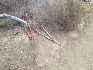 Do not attempt to clear trails yourself.