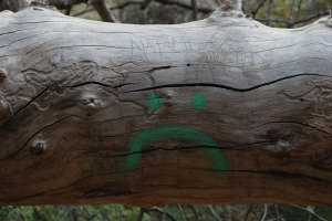 Carving trees will kill the tree.