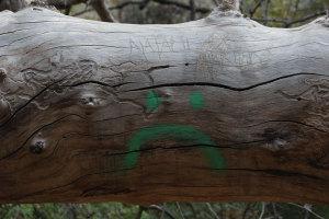 Carving trees will kill the tree.